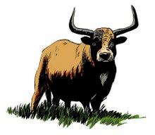 e a bela vaca barrosã com os cornos em lira