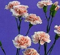 وین گلستان همیشه خوش باشد