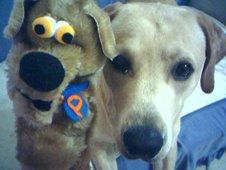 El perro Pilo juega con su amigo Bender