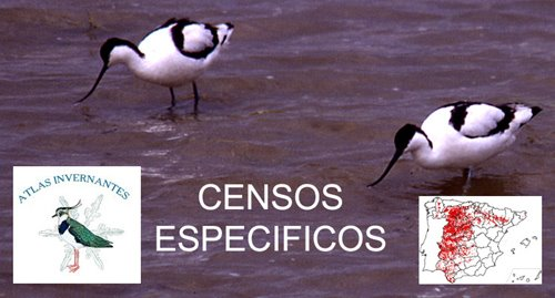 Censos Específicos