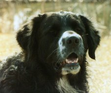 Woofie