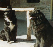 Woofie & Patti
