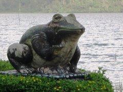 la mia rana vi saluta e vi ringrazia per le vostre lettere
