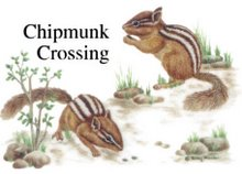Chipmunk Breeder, Bristol England United Kingdom