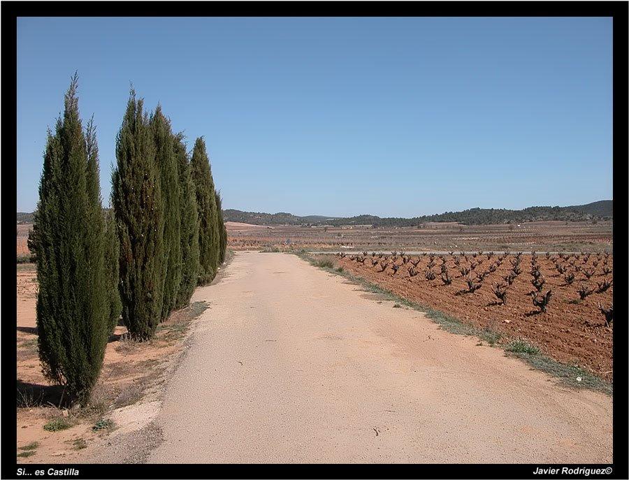 16 Castilla