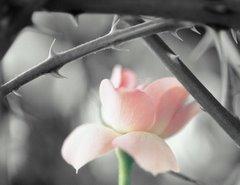 Beleza entre espinhos