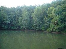 lacul şi pădurea (sovata)