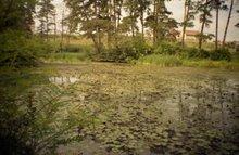 Lacul cu nuferi din 1 Mai