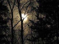Тихая ночь меж ёлок и дубов