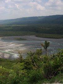 Ecoagents Saving the Amazon