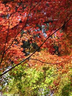 Sanzenin Temple, Kyoto sightseeing