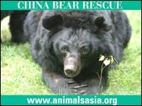 China Bear rescue