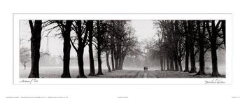 Avenida de árboles (Michael Hudson)