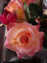 Del rosal de Lala