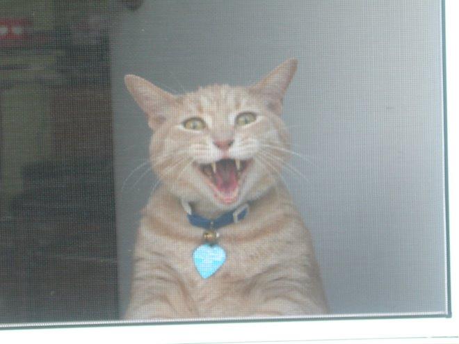 Washington, Begging through the screen door to go outside