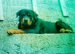 Imir (1995-2004)