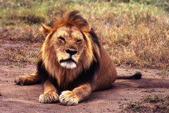 La mirada del Rey