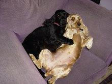 Baffie & Bridie