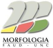morfo1