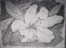 Fleur en croquis
