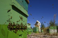 Busy Hive