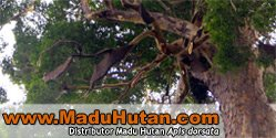 website Madu Hutan
