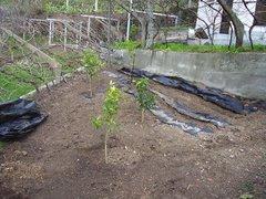 As novas Plantações Fevereiro 2007