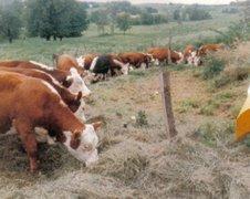 My Pasture, circa 1982