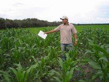 Agricultura em Chapadinha-MA