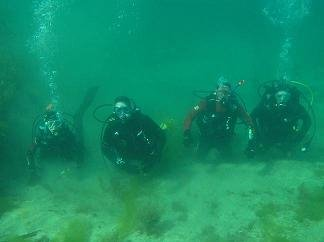 John Ryan & Co. at Zetland Pier Dive Site