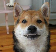 smiling Nicky
