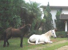Onde já se viu cavalo-de-guarda?