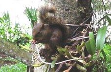 Todo esquilo é cara-de-pau.