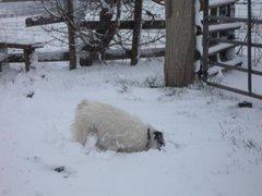Snow Plough!