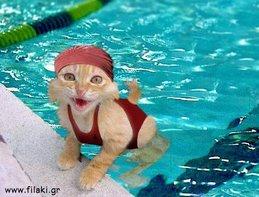 Πάντα σκουφάκι στην πισίνα!