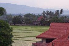 Au bord des rizières