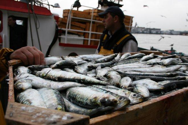 "Pescadores volviendo de ""faenar"""
