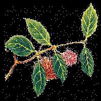 Herbal / Natural Medicine
