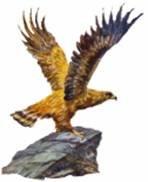 Como águilas
