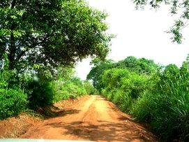 Sendero Paraguayo, Zona de caña de azucar