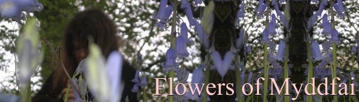 Flowers of Myddfai