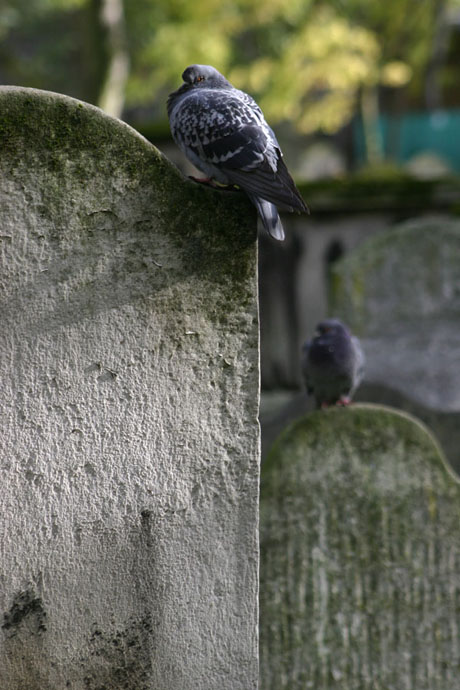 Pigeons, Bunhill Fields, London