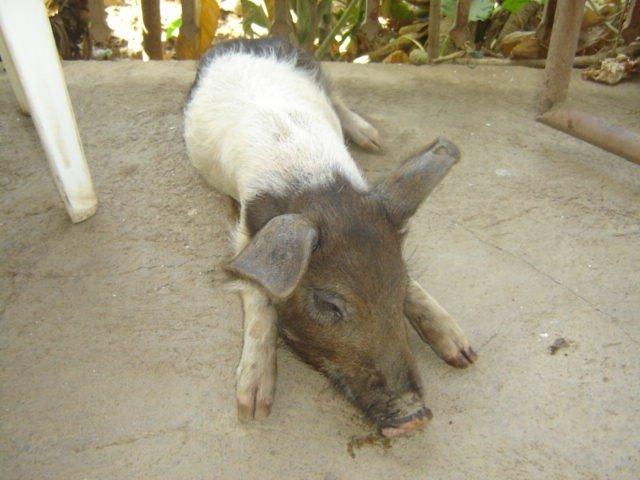 "Pig (""Chanchito"")"