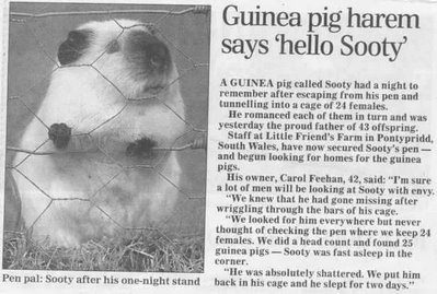 Sooty article.