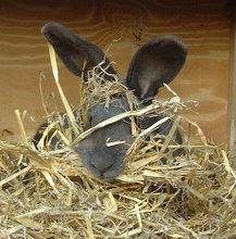 Fuzzy Bunny KNITS!
