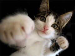 Kitteh fightooooo