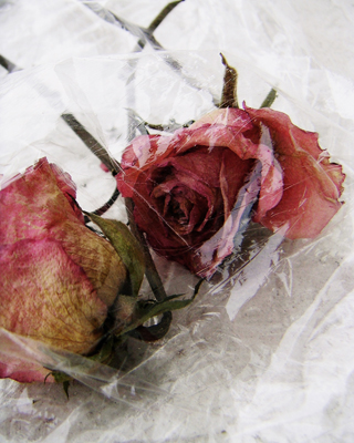 roses and plastic #1