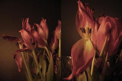 tulips #2