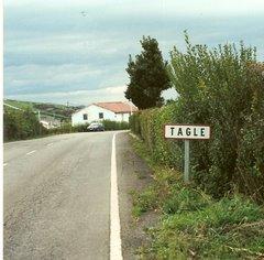 Tagle