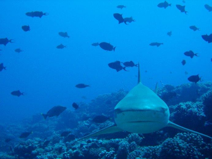 Inolvidable el color azul del Pacífico y la mirada curiosa de sus moradores